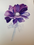 Anemone in watercolour