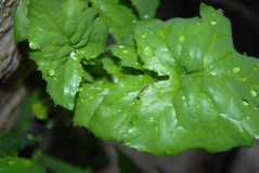 rescued caterpillar
