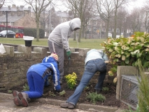 Young people planting shrubs